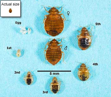 Winnipeg Bed Bug Heating Winnipeg Bed Bug Heating Is Sleep Tight