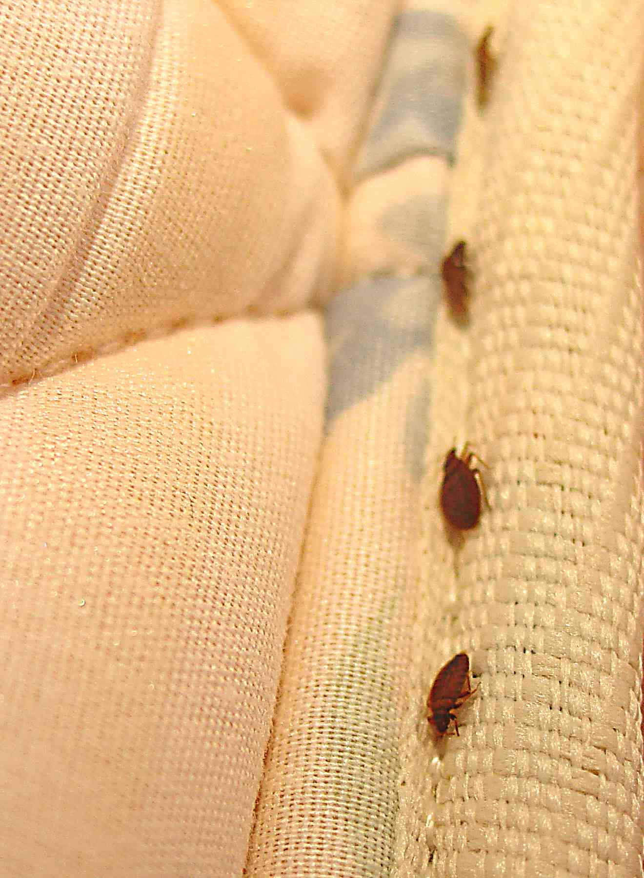 Winnipeg bed bug heating winnipeg bed bug heating is for How do i prevent bed bugs
