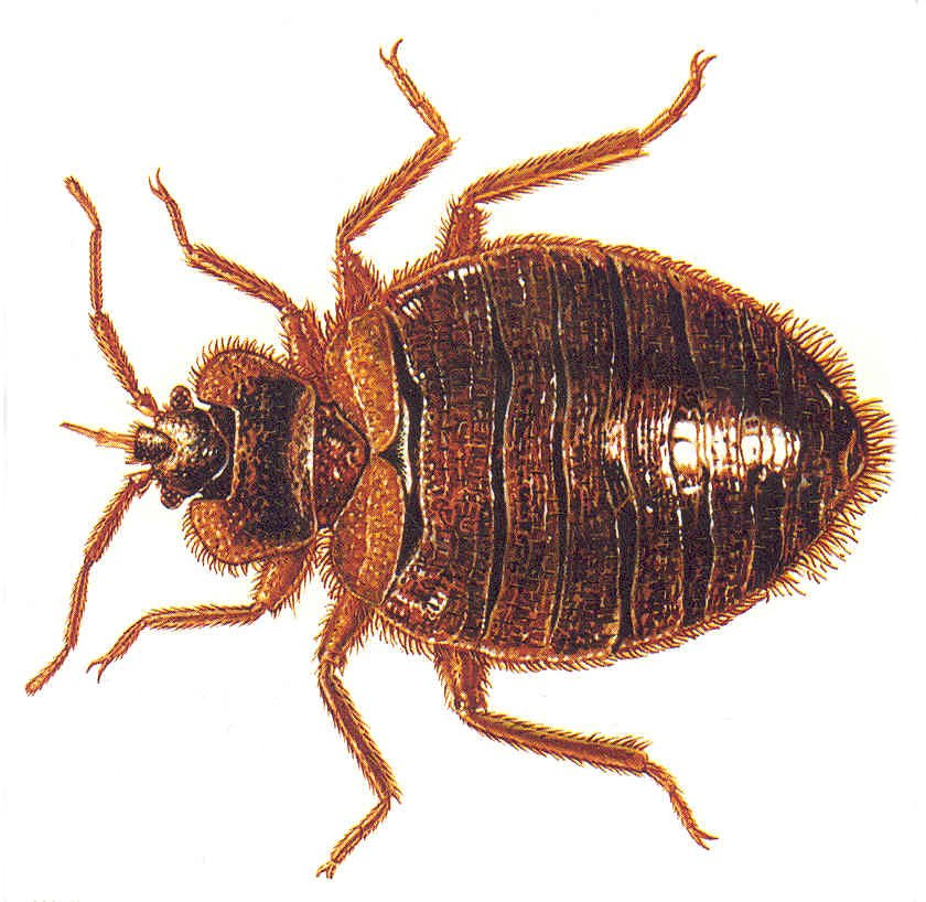 Who Is Responsible For Bed Bugs In A Rental House