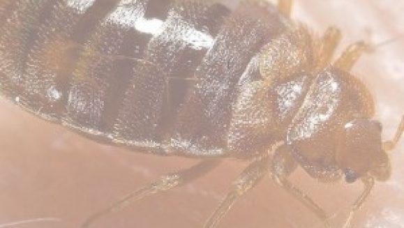 bug-300x273